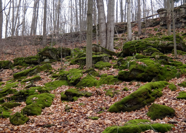 The Interconnecting Trails in Dundas Valley (6/6)